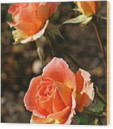 Brass Band Roses In Autumn Wood Print