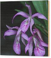 Brassanthe Maikai Orchid Wood Print