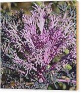 Brassica Wood Print