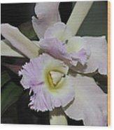 Brassocattleya Princess Teresa 1 Of 2 Wood Print