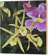 Brassolaelia Yellow Bird And Pink Miltoniopsis  Wood Print