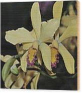 Brassolaeliocattleya Grodsky's Gold Wood Print