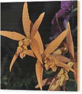 Brassolaeliocattleya Hawaiian Treat Wood Print