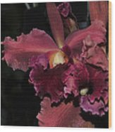Brassolaeliocattleya Helen Huntington  Chevy Chase Wood Print