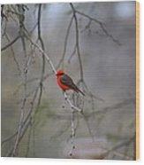 Brazilian Flycatcher #2 Wood Print