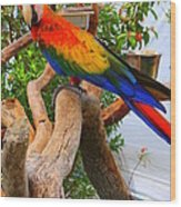 Brazilian Parrot Wood Print
