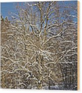 Break Under A Large Tree - Sunny Winter Day Wood Print by Matthias Hauser