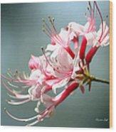 Breathtaking Beauty Wood Print