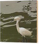 Breeding Egret Wood Print