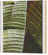Breeze - Banana Leaf Triptych Wood Print