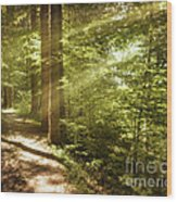 Eternal Woods Wood Print