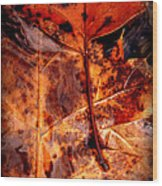 Brellow Wood Print