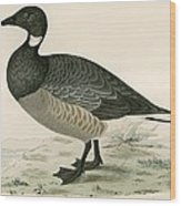 Brent Goose Wood Print