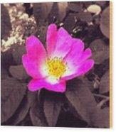 Briar Rose  Wood Print