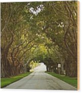 Bridge Road Banyans Wood Print