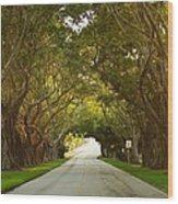 Bridge Road Banyans Wood Print by Lynda Dawson-Youngclaus