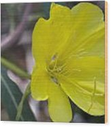 Bridges Evening Primrose Wood Print