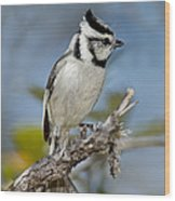 Bridled Titmouse Wood Print