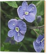 Bright And Blue Wood Print
