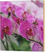 Bright And Purple Butterfly Orchids Wood Print