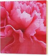 Bright Carnation Wood Print