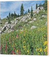 Bright Colors Of A Colorado Summer Wood Print