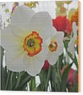 Bright Daffodils Wood Print