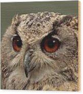 Bright Eyed Eagle Owl  Wood Print