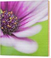 Bright Floral Display Wood Print