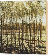 Bright Forest - Bosque Luminoso Wood Print