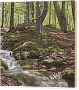 Bright Forest Creek Wood Print