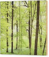 Bright Green Forest In Spring With Beautiful Soft Light  Wood Print