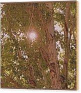 Bright Light Wood Print