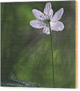 Bright Light Flower Wood Print