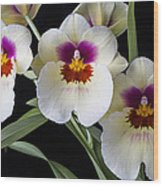 Bright Miltonia Orchids Wood Print