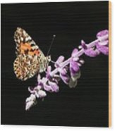 Painted Lady Butterfly On Purple Flower Wood Print