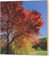 Bright Orange Of Fall Wood Print