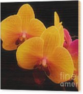Bright Orchids Wood Print