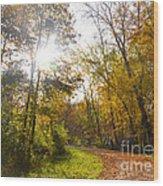 Bright Path Wood Print