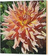 Bright Peachy Star Wood Print