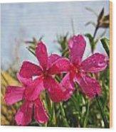 Bright Phlox Blooms Wood Print