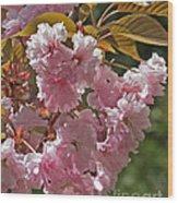 Bright Pink Apple Tree Flowers Wood Print