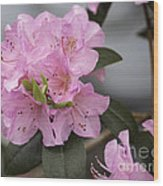 Bright Pink Azalea Wood Print