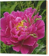 Bright Pink Blossoms Wood Print