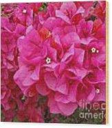 Bright Pink Bougainvillea Flowers Wood Print