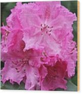 Bright Pink Blossoms Wood Print