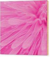 Bright Pink Dandelion Close Up Wood Print by Natalie Kinnear