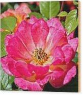 Bright Pink Rose Wood Print