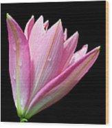 Bright Pink Trumpet Lily  Wood Print