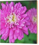 Bright Pink Zinnia Flowers Wood Print